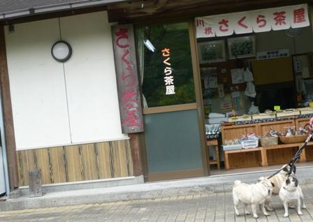 桜茶屋.jpg